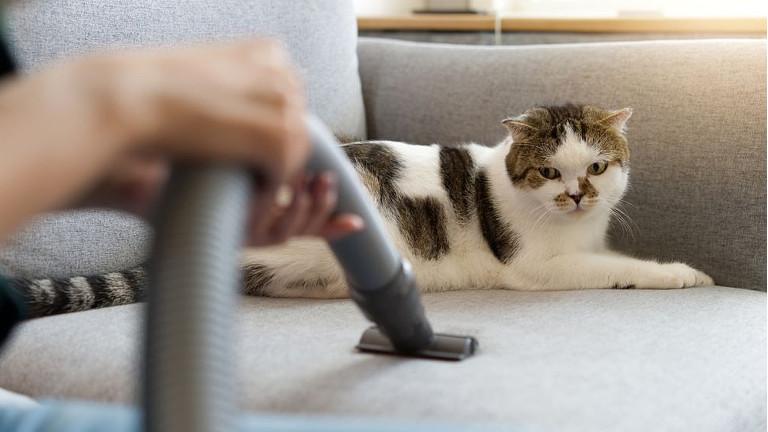 como sacar el olor a pis de gato de un sillon