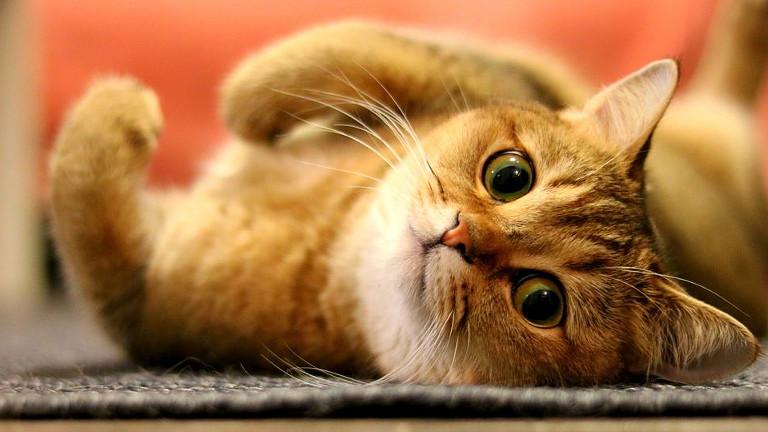 como sacar el olor a pis de gato