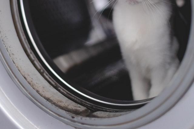 Como eliminar el moho de la goma de la lavadora