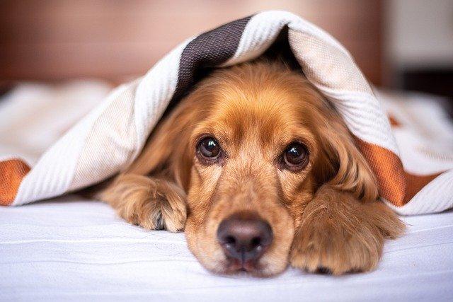 Limpiar un colchón rápido y fácil